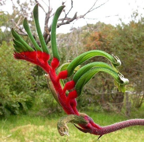 Subtropical-plants