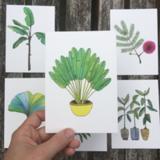 Postcard 'Caterpillar Fern'_