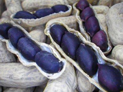 Black Peanut (Arachis hypogaea 'Black')